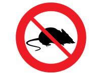 muizen bestrijding Flux ongediertebestrijdingsdienst Utrecht